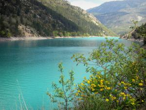 Chaudanne lake - Flower-bedecked shrubs in the foreground, emerald-coloured lake (water reservoir), shores and mountains; in the Verdon Regional Nature Park