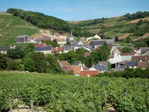 Chavignol - Vineyards, houses and church of the village, trees and hills