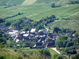 Chavignol - Houses of the village, trees and vineyards