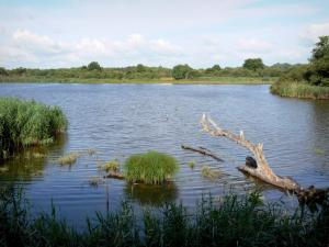 Chérine Nature Reserve - Ricot lake and reedbed (reeds); in La Brenne Regional Nature Park