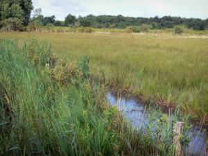 Chérine Nature Reserve - Reeds and meadow; in La Brenne Regional Nature Park