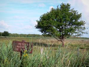Chérine Nature Reserve - Signboard of the Chérine nature reserve, reeds, fence and tree in a meadow; in La Brenne Regional Nature Park