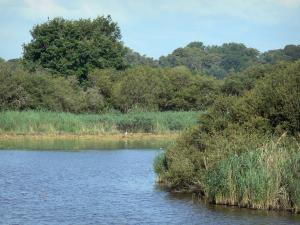 Chérine Nature Reserve - Ricot lake, reeds and trees; in La Brenne Regional Nature Park
