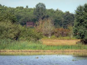 Chérine Nature Reserve - Observatory of the nature reserve, trees, reeds and lake; in La Brenne Regional Nature Park