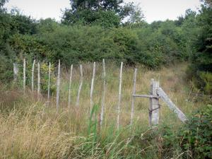 Chérine Nature Reserve - Fence and vegetation; in La Brenne Regional Nature Park