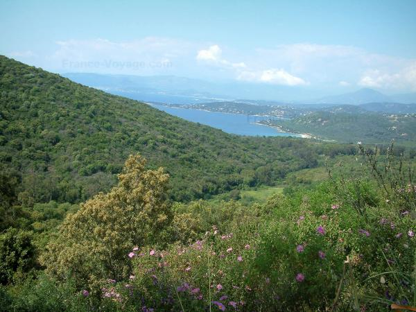 The Chiavari forest - Tourism, holidays & weekends guide in the Southern Corsica