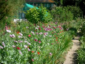 Claude Monet's house and gardens - Monet's garden, in Giverny: Norman enclosure: flowerbed