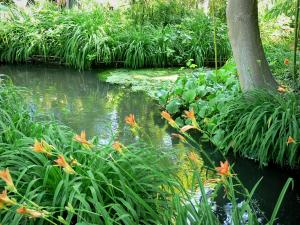 Claude Monet's house and gardens - Monet's garden, in Giverny: water garden: orange lilies and small stream