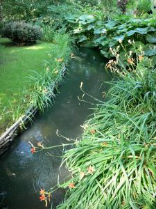 Claude Monet's house and gardens - Monet's garden, in Giverny: water garden: small stream lined with blooming lilies