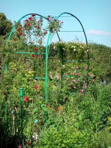 Claude Monet's house and gardens - Monet's garden, in Giverny: Norman enclosure: arches adorned with blooming rose bushes, and plants