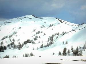 Col d'Allos pass - From the collar, view of a snowy mountain (snow) dotted with trees