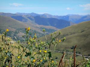 Col de Peyresourde pass - Wildflowers in the foreground with a view of the Pyrenees mountains