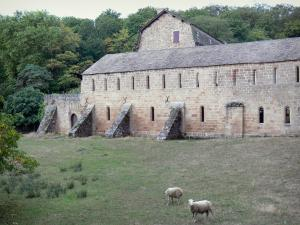 Comberoumal priory - Priory of grandmontain de Comberoumal: Monastic buildings and meadow with sheep