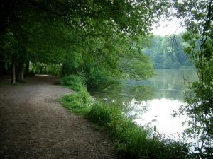 Commelles lakes - Shaded shore (footpath), trees of the forest, vegetation and fishpond