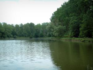 Compiègne forest - Etot lake (Bern brook) and trees
