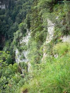 Consolation rock formations - Cliff (rock face), vegetation and trees