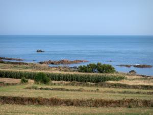 Cotentin coast - Caps road: fields by the Channel (sea); landscape of the Cotentin peninsula