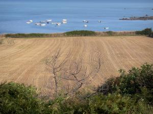 Cotentin coast - Caps road: field with view of the Channel (sea) and leisure boats; landscape of the Cotentin peninsula