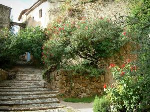 Cotignac - Paved stairway, stone low wall, rosebushes (roses), laurels with flowers and houses of the village