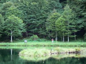 Couserans - Bethmale lake and its bank planted with trees, fisherman (fishing); in the Ariège Pyrenees Regional Nature Park, in the Bethmale valley