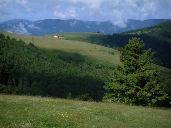 Crest road - Hills and mountains with trees and pastures (Ballons des Vosges Regional Nature Park)
