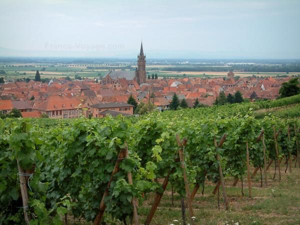 Dambach-la-Ville - Vines, houses and church of the fortified town, the Alsace plain in background