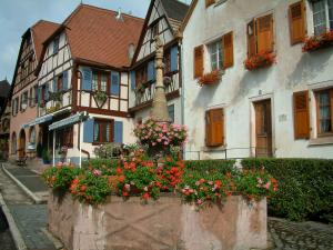 Dambach-la-Ville - Fountain decorated with geranium flowers (geraniums) and half-timbered houses