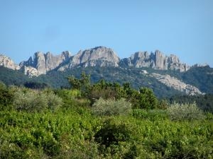 Dentelles de Montmirail - Vineyards, olive trees, trees and massif with its cliffs and its peaks