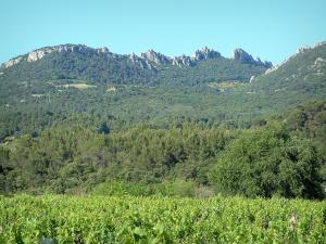 Dentelles de Montmirail - Vineyards, trees and massif with its peaks