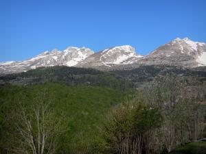 Dévoluy mountain range - Trees, forest and mountains with snowy tops (snow)