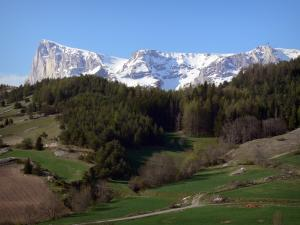 Dévoluy mountain range - Meadows, trees and Bure peak covered with snow