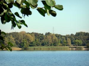 Divonne-les-Bains - Spa town: Lake (artificial lake) and its bank planted with trees; in the Pays de Gex
