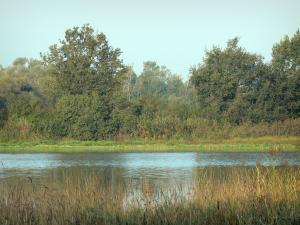 Dombes - Reeds (canne), laghetto e alberi