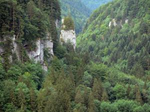 Doubs gorges - Rock faces and forest (trees)