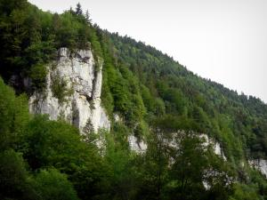 Doubs gorges - Rock faces (cliffs) and trees (forest)