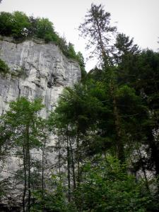 Doubs gorges - Cliff (rock face) and trees