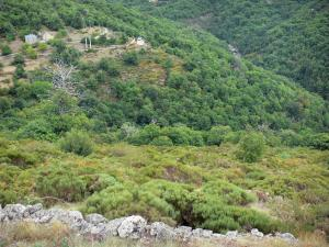Dourbie gorges - Mountain lined with trees and vegetation; in the Cévennes