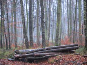 Eawy forest - Trees, cut wood, and leaves