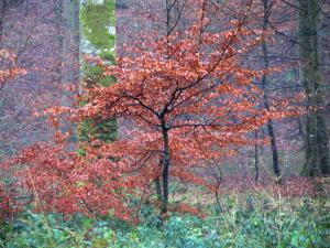 Eawy forest - Trees, shrubs with autumn colours and vegetation
