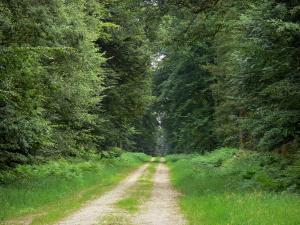 Écouves forest - Forest: path lined with trees and vegetation; in the Normandie-Maine Regional Nature Park