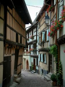 Eguisheim - Narrow paved street with half-timbered houses, geranium flowers and plants