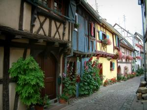 Eguisheim - Narrow paved street and colourful half-timbered houses decorated with plants, flowers and geraniums