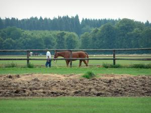 Equestrian sport - Riding (equestrian)school: grassland, hay, wooden barrier, meadow someone walking a horse, forest in background