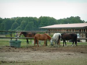 Equestrian sport - Riding (equestrian)school: horses, stable boxes and trees