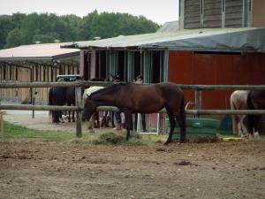 Equestrian sport - Riding (equestrian)school: horses and stable boxes