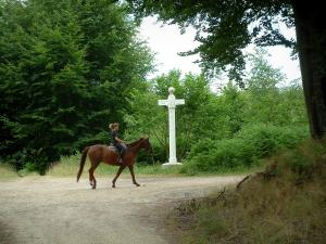 Equestrian sport - Road in the Compiègne forest with a rider and its horse, trees and orientation panel