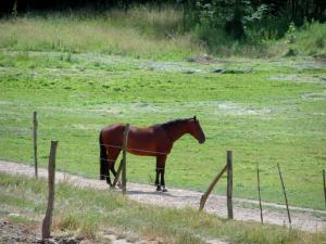 Equestrian sport - Horse in an enclosed meadow