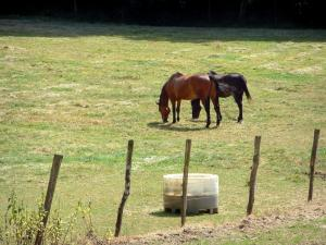 Equestrian sport - Horses in an enclosed meadow