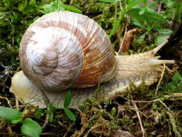L'escargot de Bourgogne - Guide gastronomie, vacances & week-end en Bourgogne