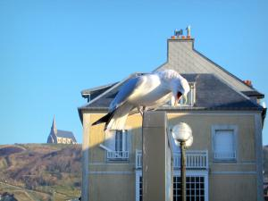 Étretat - Gabbiano (Sea Bird) in primo piano, lampada, sede del resort e Notre Dame de la Garde in background